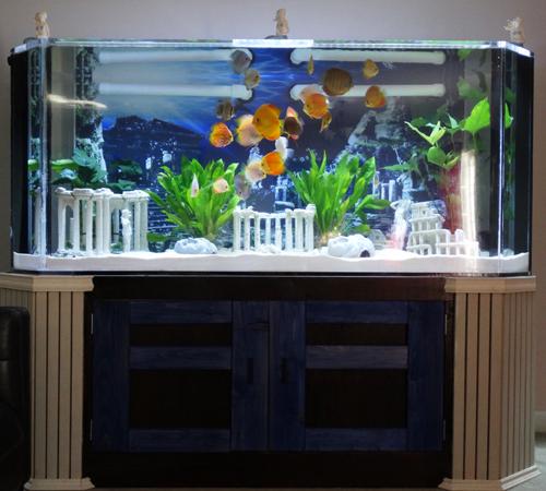 Aquatic Scene